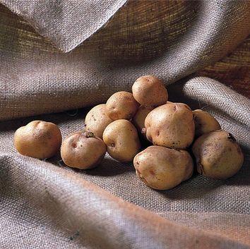 R ussir la culture des legumes potager - Arrosage pomme de terre ...