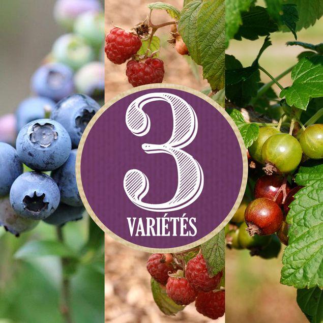 ASSORTIMENT DE 6 PETITS FRUITS (Cassis, framboisier, myrtillier)