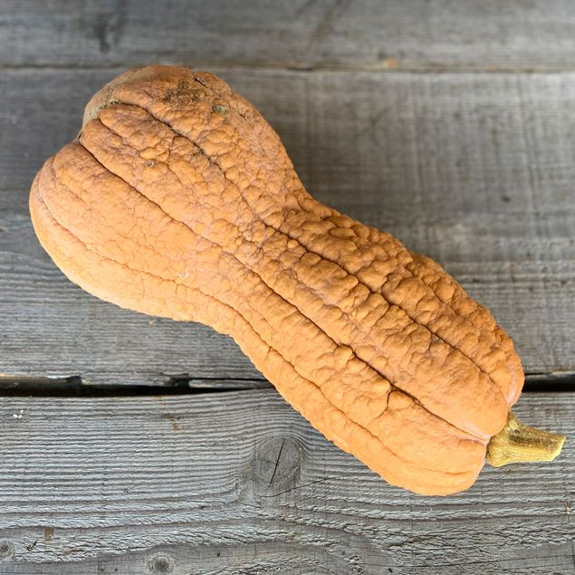 COURGE MUSQUEE VIOLINA AB
