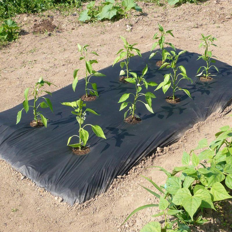 Les paillages ferme de sainte marthe for Achat terre de jardin