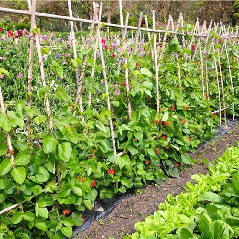 Conseils pour un potager au jardin ferme de sainte marthe for Allee de jardin potager